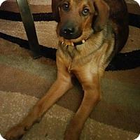 Adopt A Pet :: Drago - Morganville, NJ