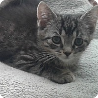 Adopt A Pet :: Jackie - Myrtle Beach, SC