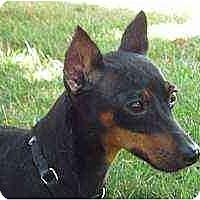 Adopt A Pet :: Naomi - Florissant, MO