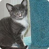 Adopt A Pet :: Splash - Jeffersonville, IN