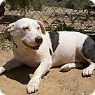 Adopt A Pet :: Potato(BRN)