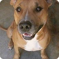 Adopt A Pet :: Pete - Tahlequah, OK
