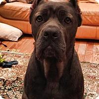 Adopt A Pet :: Zina - Virginia Beach, VA