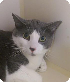 Fort Collins Cat Rescue Shelter