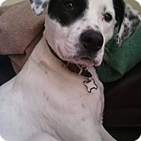 Adopt A Pet :: Dottie - Evergreen Park, IL