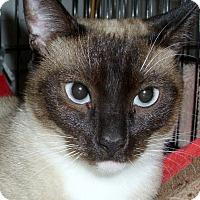 Adopt A Pet :: Tee-Tee - Chattanooga, TN