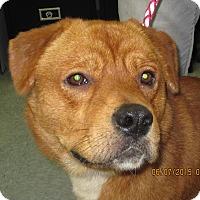 Adopt A Pet :: Frankie - Buffalo, WY