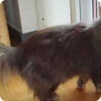 Adopt A Pet :: LA-Sissy - Devon, PA