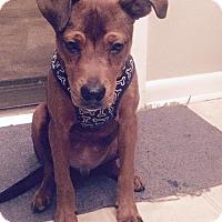 Adopt A Pet :: Truman - Burlington, NJ