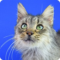 Adopt A Pet :: Biscotti - Carencro, LA