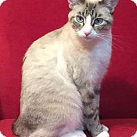 Adopt A Pet :: Sky - Bentonville, AR