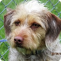 Adopt A Pet :: Gucci - Germantown, MD