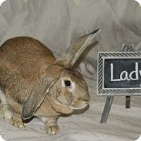 Adopt A Pet :: Lady - Holbrook, NY