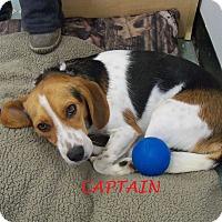 Adopt A Pet :: CAPTAIN - Ventnor City, NJ
