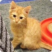 Adopt A Pet :: RalphC - North Highlands, CA