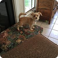 Adopt A Pet :: Emma - Wyanet, IL