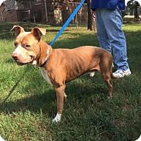 Adopt A Pet :: JORDAN*NEEDS A FOSTER - Sterling, MA