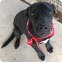 Adopt A Pet :: ETHAN - Pilot Point, TX