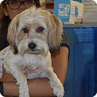 Adopt A Pet :: Katie - Lodi, CA