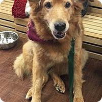 Adopt A Pet :: Adele - BIRMINGHAM, AL