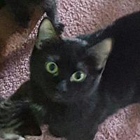 Adopt A Pet :: Vail - O'Fallon, MO