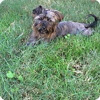 Adopt A Pet :: Guinness - MCKINNEY, TX