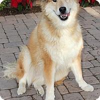 Adopt A Pet :: Rex - Glendale, AZ