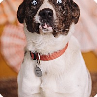 Adopt A Pet :: Hobert - Portland, OR