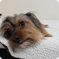 Adopt A Pet :: Lucky - Long Beach, NY