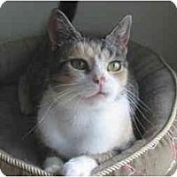 Adopt A Pet :: Torri - Colmar, PA