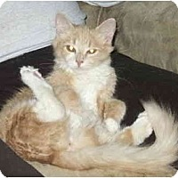 Adopt A Pet :: Peaches - Crescent City, CA