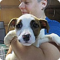 Adopt A Pet :: Mary - South Jersey, NJ
