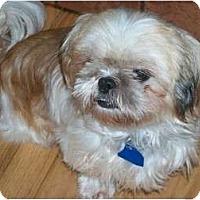Adopt A Pet :: Polly - Wellington, OH