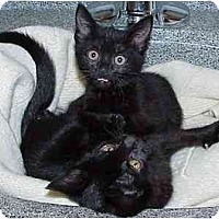 Adopt A Pet :: Tabitha and MarshMellow (toget - Portland, OR