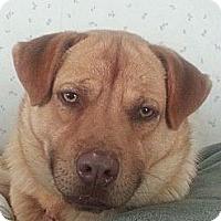 Adopt A Pet :: Benny - Bardonia, NY