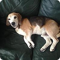 Adopt A Pet :: Mak - Phoenix, AZ