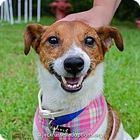 Adopt A Pet :: Rusty - Conyers, GA