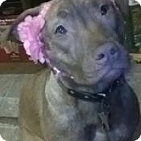 Adopt A Pet :: Jaycee - Sterling, MA