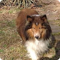 Adopt A Pet :: Cane - Charlottesville, VA