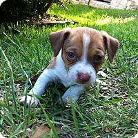 Adopt A Pet :: Orwell - Austin, TX