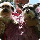 Adopt A Pet :: Maggie and Bella (POM-Wanda)