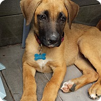 Adopt A Pet :: Sunny - Adoption Pending - Gig Harbor, WA