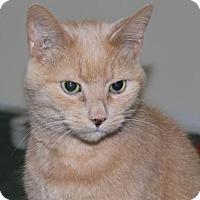 Adopt A Pet :: Duffy - Caistor Centre, ON