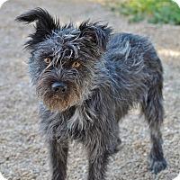 Adopt A Pet :: Freddy - Meridian, ID