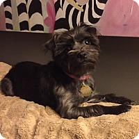 Adopt A Pet :: Raven - Beavercreek, OH