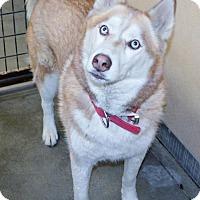 Adopt A Pet :: Rico - San Jacinto, CA