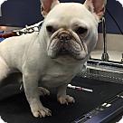Adopt A Pet :: Rodger