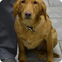 Adopt A Pet :: Josie - Pacific, MO