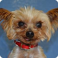 Adopt A Pet :: Ash - Larned, KS