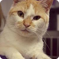 Adopt A Pet :: Emerald - Niagara Falls, NY